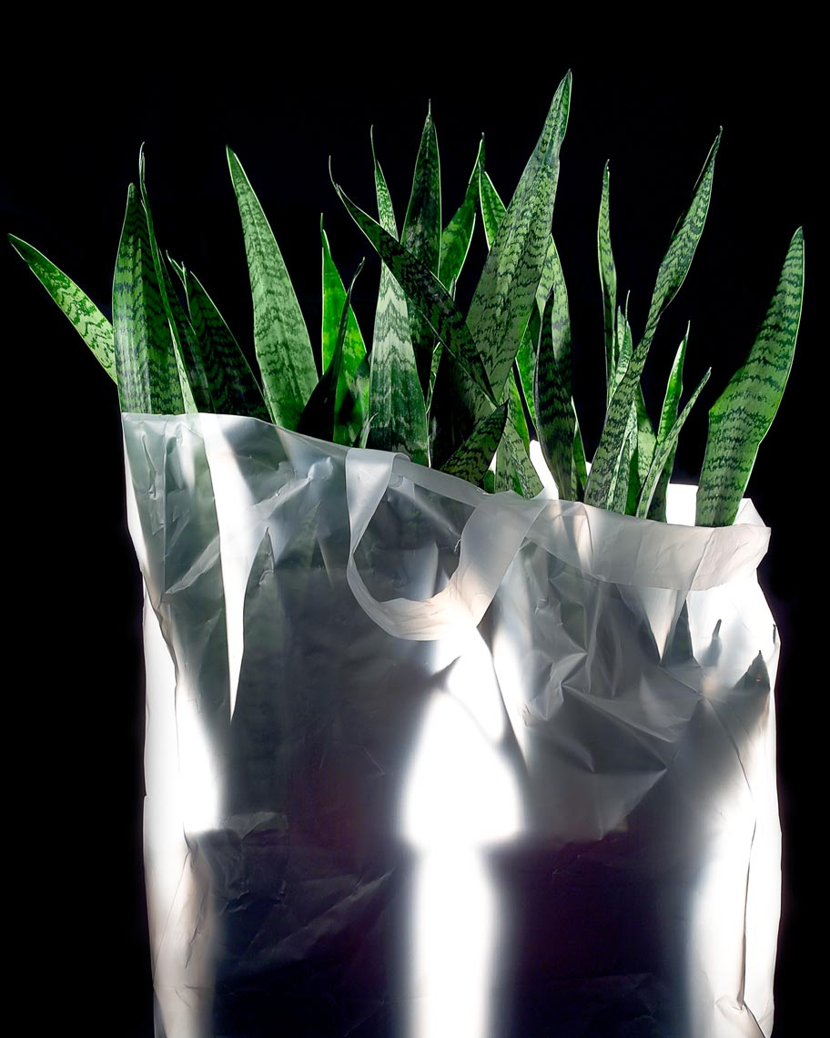 Plants_in_a_Bag.jpg