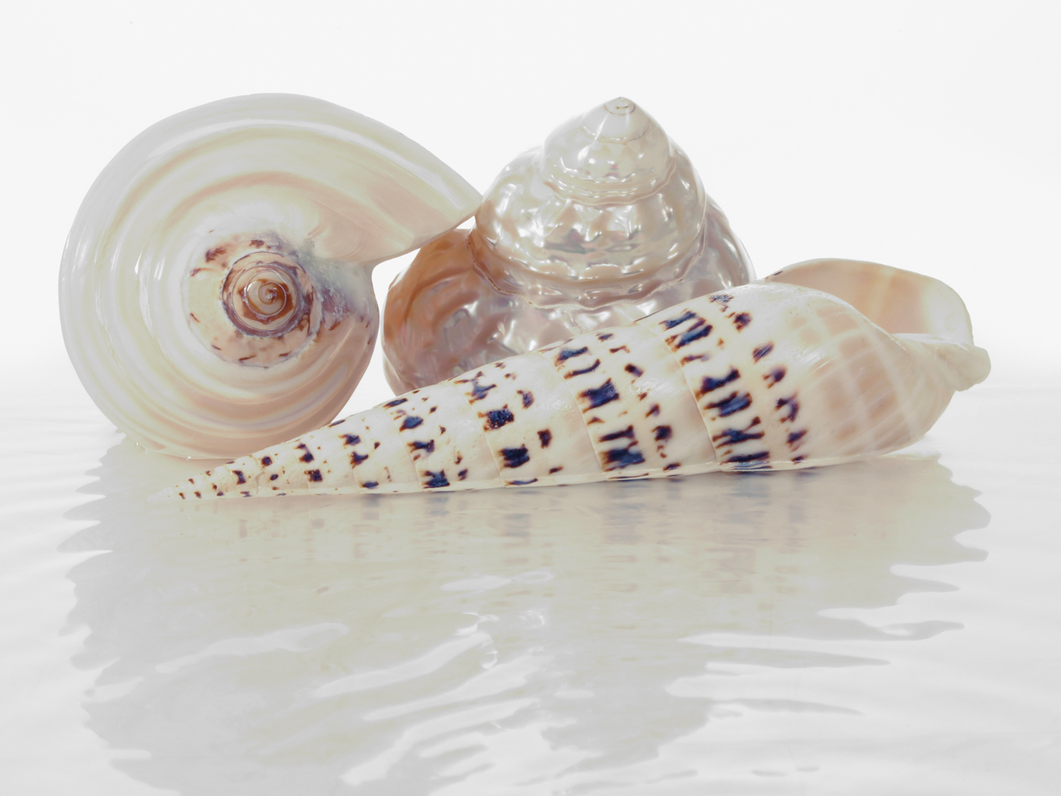 Three_Shells_in_Water.jpg